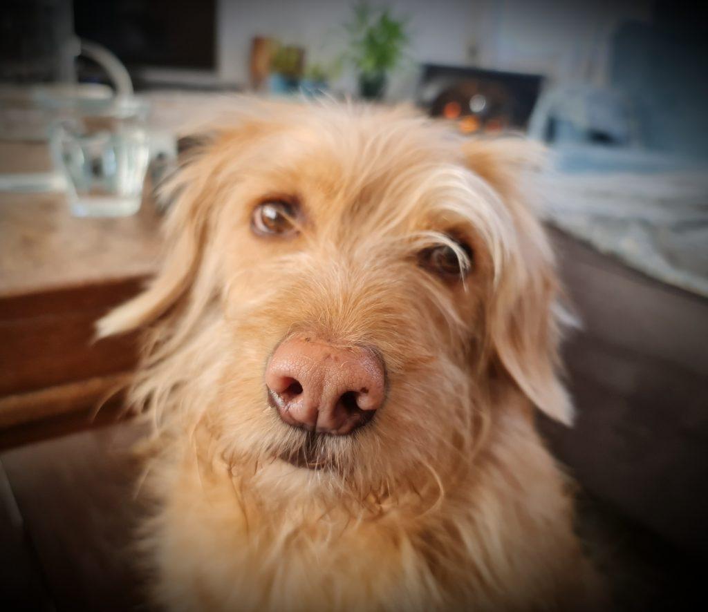 Onze geadopteerde hond Bas