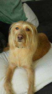 Hond adopteren buitenland - Adoptiehondje Bas