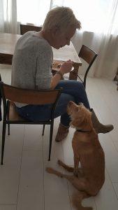 Hond adopteren buitenland - tweede knieoperatie